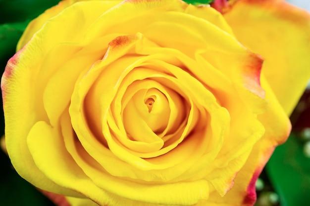 Texture rose jaune