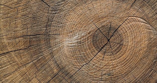 Texture de souche en bois