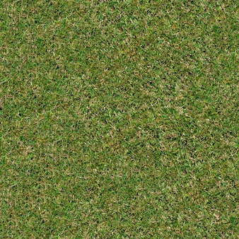Texture tileable transparente de l'herbe de printemps jeune.