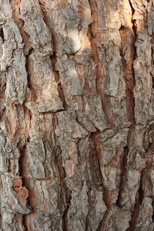 Texture très haute définition d'une portion d'écorce de pin maritime