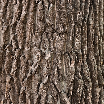 Texture de tronc d'arbre en bois close-up