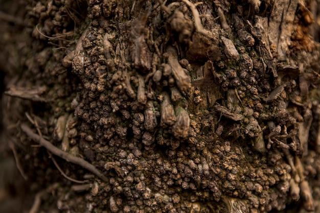 Texture de tronc d'arbre bouchent