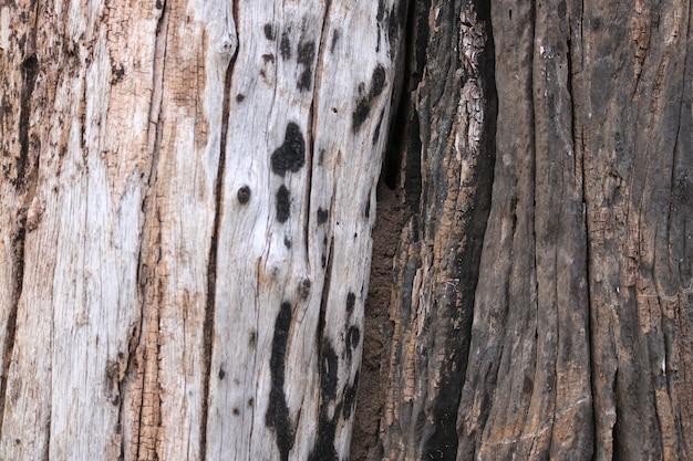 Texture de tronc d'arbre avec fond de contraste de couleurs