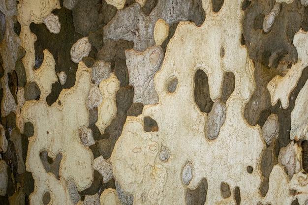 Texture de tronc d'arbre platanus camouflé
