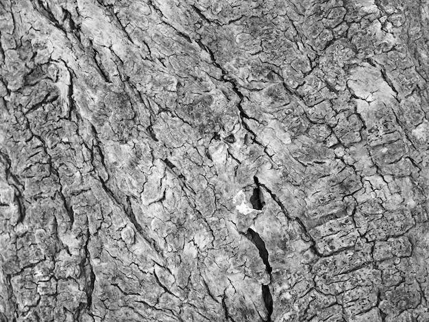 Texture de tronc d'arbre