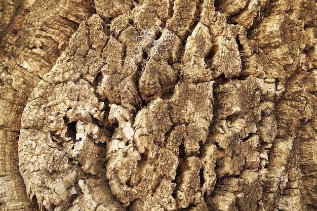 Texture de tronc de bois naturel