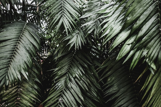 Texture tropicale exotique de palme