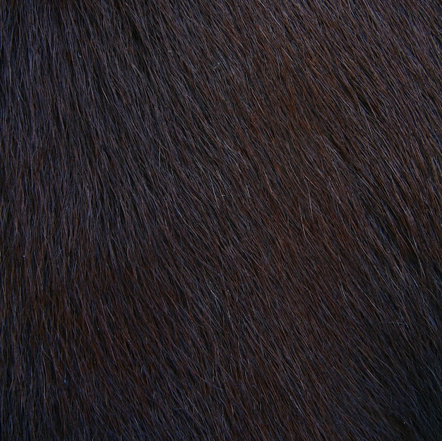 Texture velue de cheval, fourrure