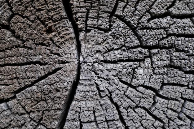 Texture d'un vieil arbre scié avec des fissures