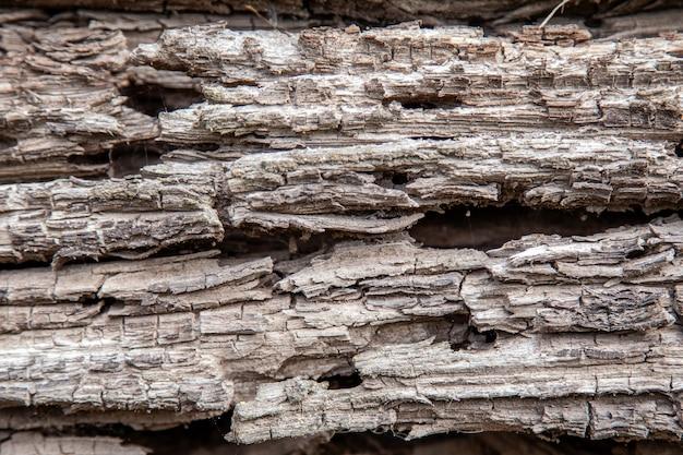 Texture d'une vieille bûche en bois pourrie