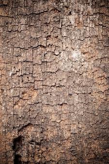 Texture vieux fond de bois.