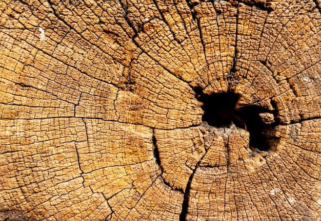 Texture de vieux fond de tronc d'arbre bois