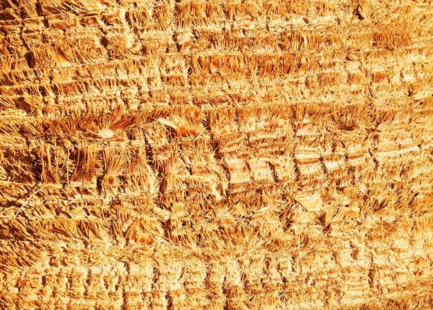 Textures et fond de nature de peau de palmier