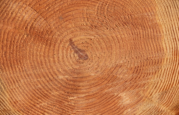 Textures de troncs d'arbres de pin à l'extérieur
