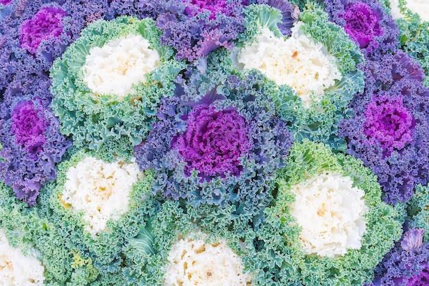 Textures végétales de laitue pour l'arrière plan