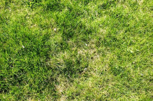 Textures vertes d'herbe