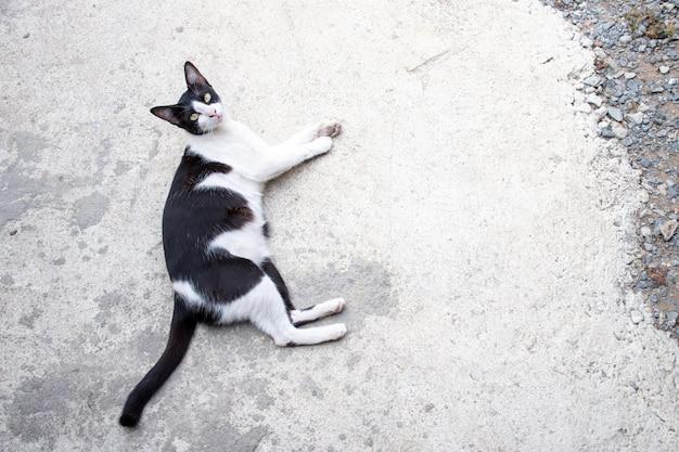 Thai noir et blanc dormant sur le sol en ciment avec espace copie
