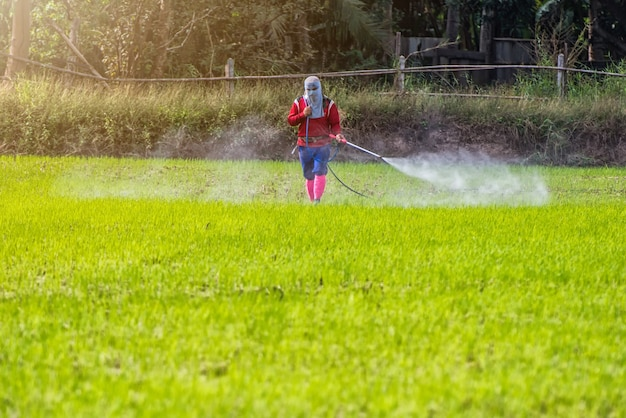 Thaïlande man farmer pour pulvériser des herbicides ou des engrais chimiques.