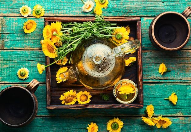 Thé aux fleurs de guérison. théière avec thé aux fleurs de chrysanthème. phytothérapie, infusion de thé