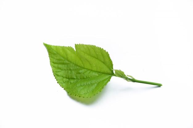 Thé nature à base de plantes sur fond isolé
