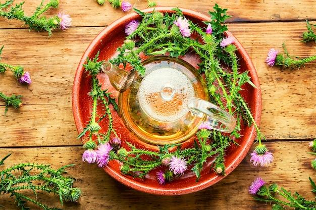 Théière avec tisane sauvage médicinale.chardon-marie ou silybum marianum en phytothérapie
