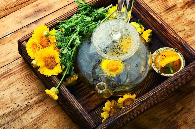 Théière en verre avec thé aux fleurs de chrysanthème. thé aux fleurs. phytothérapie. phytothérapie et homéopathie. tisane.