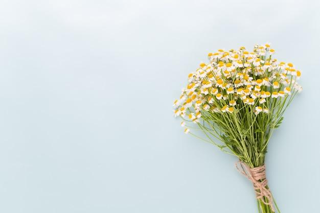 Thème d'aromathérapie à la camomille, cosmétique artisanale. espace pour les herbes médicinales et textuelles