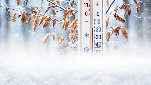 Le thermomètre dans la neige sur le fond d'une branche d'arbre avec des feuilles sèches montre 15 degrés au-dessous de zéro
