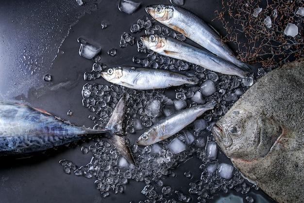 Thon frais cru, hareng et poisson plat