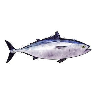 Thon, illustration isolée aquarelle d'un poisson.