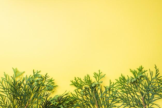 Thuya branche sur fond jaune avec espace de copie.