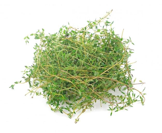 Thym aux herbes isolé sur fond blanc