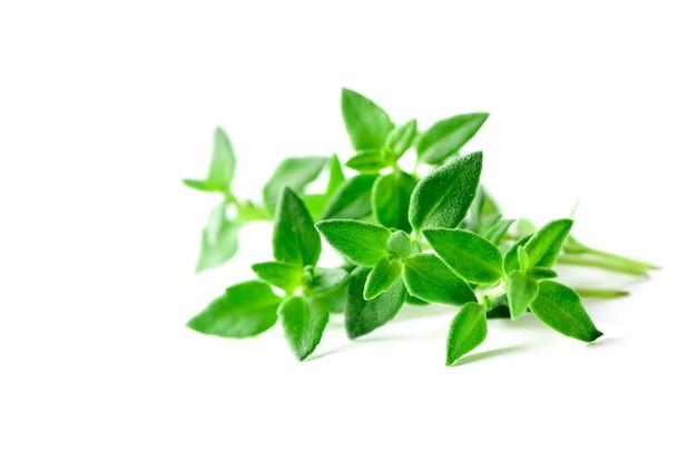 Thym herbes fraîches closeup isolé