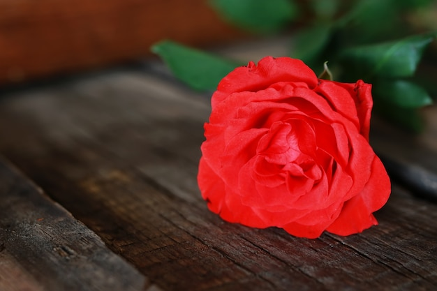 Tige de bouton de rose sur fond vieux bois