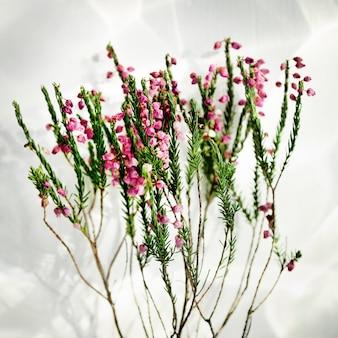 Tige fleur beau concept frais