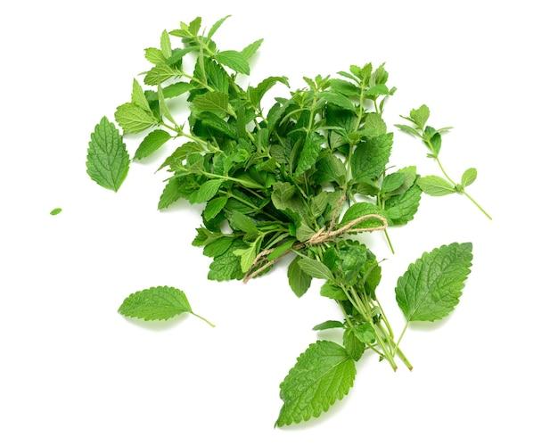 Tiges attachées de menthe fraîche dans un tas isolé sur fond blanc, feuilles vertes, vue de dessus