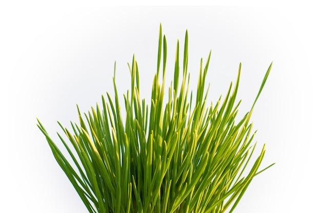 Tiges droites d'herbe jeune sur blanc