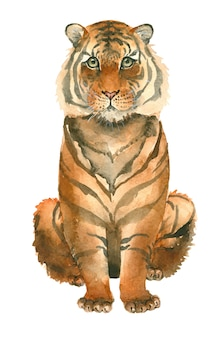 Tigre dessiné à la main
