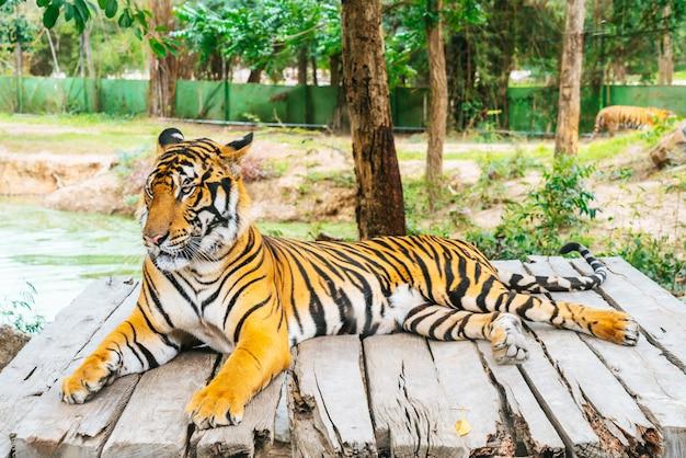 Tigre du bengale couché en bois