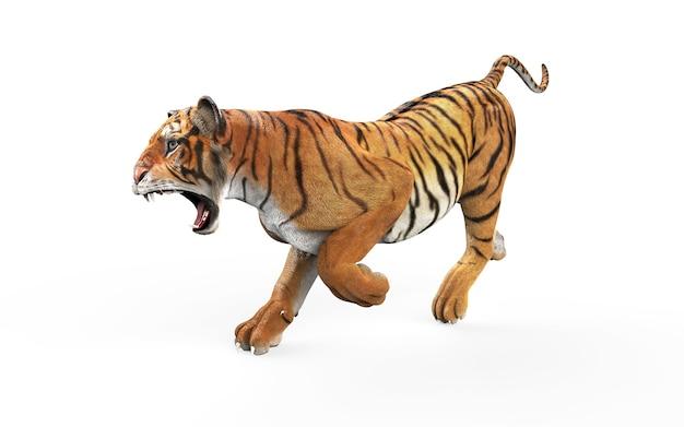 Tigre du bengale dangereux sur fond blanc avec un tracé de détourage