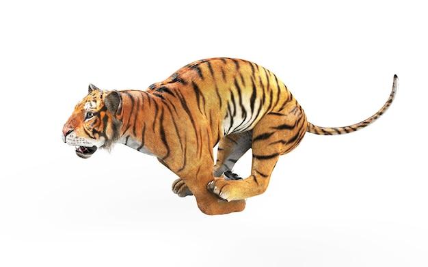 Tigre du bengale dangereux isolé sur fond blanc avec un tracé de détourage