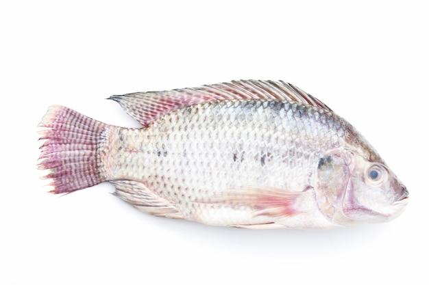 Tilapia sur fond blanc