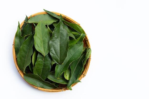 Tiliacora triandra feuilles vertes sur blanc