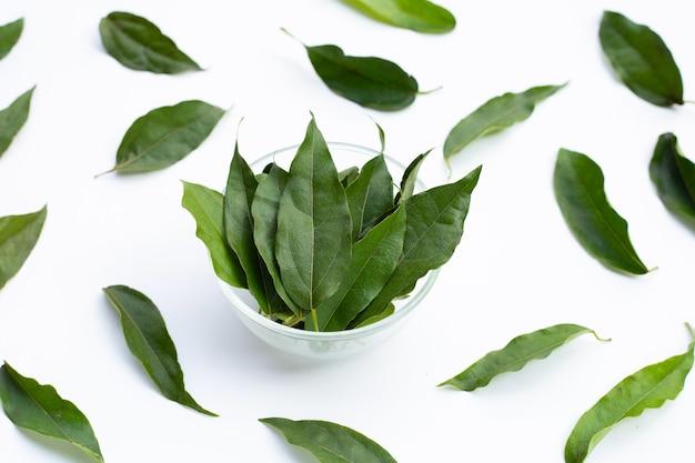 Tiliacora triandra feuilles vertes sur fond blanc.
