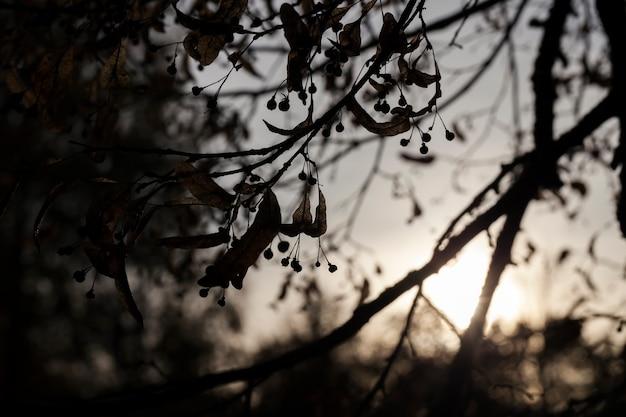 Tilleul d'automne