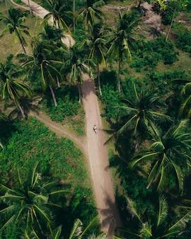 Tir aérien d'une longue route entourée de verts et d'arbres