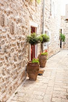 Tir extérieur de deux arbres dans des pots poussant sur les côtés de la porte au mur de pierre