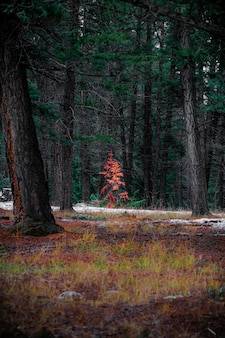 Tir vertical de beaux paysages d'automne dans une forêt pleine de grands arbres