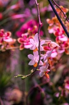 Tir vertical d'une branche avec des fleurs roses