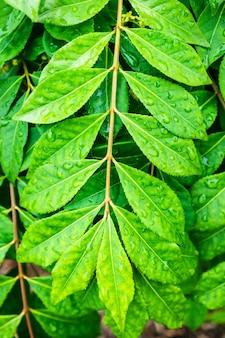 Tir vertical d'une branche verte avec des gouttes de pluie dessus
